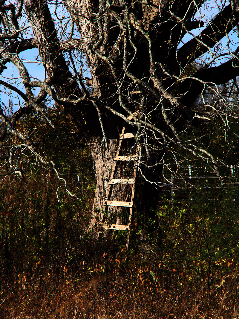 The Ladder by Christopher Woods