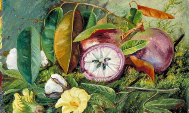 Marjorie Becker – Four Poems